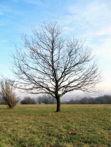 B9.tree-branches